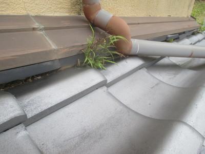 瓦屋根から草